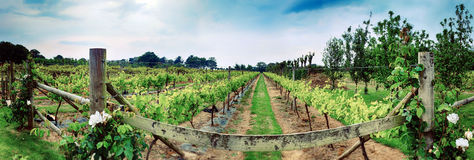 Winery panorama on Jersey Island Royalty Free Stock Photography