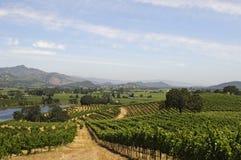Winery Scene. Beautiful winery scene on sunny day Royalty Free Stock Photos