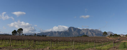 Winery in South Africa. Stellenbosch wine region of South Africa Stock Photo