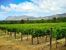 Winery in Stellenbosch Stock Photo