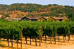 Winery in summer Royalty Free Stock Photo