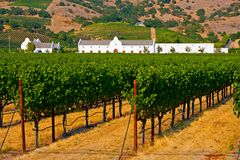 Winery in summer. Winery in California in summer Stock Image