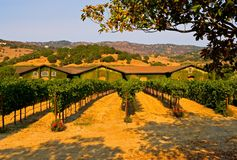 Winery at sunset Royalty Free Stock Photography