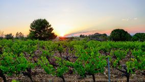 Winery in the sunset Stock Image