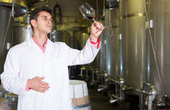 Winery technician posing with wine Royalty Free Stock Photography