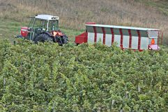 Winery-Tractor-Hopper-Vineyard Royalty Free Stock Image