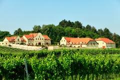 Winery and vineyard stock photos