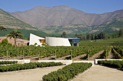Winery and Vineyard in Aconcagua Valley Chile #6 Royalty Free Stock Images