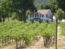 Winery in Wine country. A picture of a house on a small winery in california Stock Images
