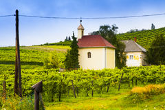 Winery. Stock Photography