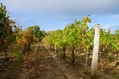 Winery yard Stock Photos