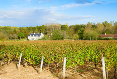 Winery yard Royalty Free Stock Photos