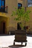 Winery yard on mediterranean sun, Marsala, Sicily Royalty Free Stock Photos