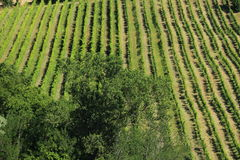 Wines in north italy Stock Photos