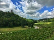 Wineyard κοντά σε Buje, Κροατία Στοκ Εικόνα