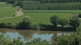 Wineyard κοντά στον ποταμό απόθεμα βίντεο