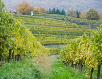 Wineyard στην Αυστρία Στοκ Εικόνες