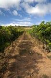 Wineyard στο Λα Rioja Στοκ εικόνα με δικαίωμα ελεύθερης χρήσης