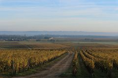 Wineyard στο Sauterne, Γαλλία στοκ φωτογραφίες με δικαίωμα ελεύθερης χρήσης
