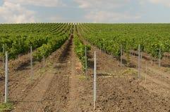 Wineyard Images stock