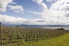 Wineyard Royalty Free Stock Photography