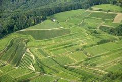 Wineyard Stock Images