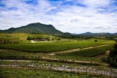 WineYard Photo stock