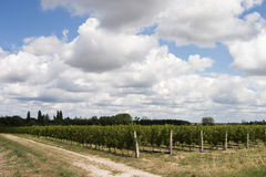 Wineyard. French wineyard Stock Photos