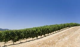 Wineyard photos libres de droits