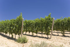 Wineyard Stock Images