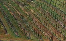 Wineyard Foto de Stock