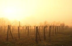 Wineyard Royaltyfri Fotografi