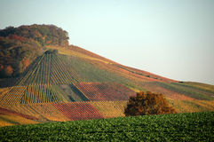 Wineyard. In autumn in southern germany Royalty Free Stock Image