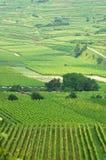Wineyard Fotografie Stock