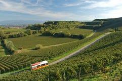 Wineyard Immagini Stock