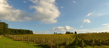 Wineyard in Chianti in Tuscany. Italy stock photography
