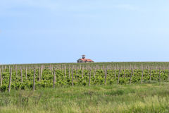 Wineyard. A country side wineyard, from fruit to wine Royalty Free Stock Photos