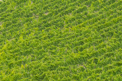 Wineyard in the countryside, Conero, Marche, Italy Royalty Free Stock Photography