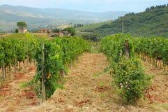 Wineyard dans le chianti en Toscane photo libre de droits