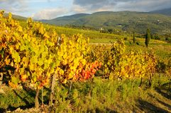Wineyard dans le chianti en Toscane photos stock