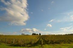 Wineyard dans le chianti en Toscane image stock