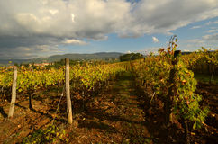 Wineyard dans le chianti en Toscane images stock