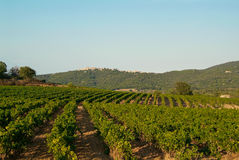 Wineyard in de Provence Stock Fotografie