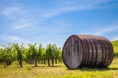 Wineyard de Toscana Imágenes de archivo libres de regalías