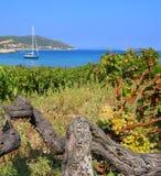 Wineyard dell'isola Fotografia Stock