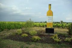 Wineyard di Sautern Immagine Stock Libera da Diritti