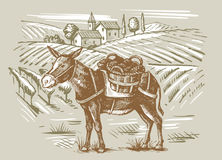Wineyard and a donkey. Vector vintage hand drawn illustration of wineyard and a donkey Stock Photo