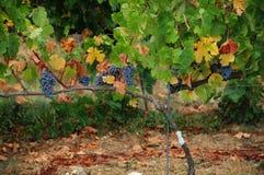 Wineyard en Chianti en Toscana imágenes de archivo libres de regalías
