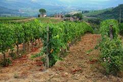 Wineyard en Chianti en Toscana imagen de archivo libre de regalías