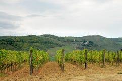 Wineyard en Chianti en Toscana imagenes de archivo